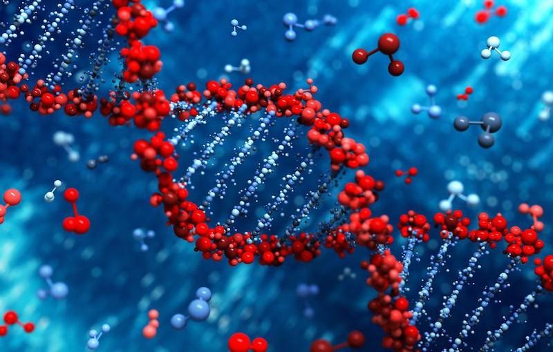 El ADN y el almacenamientobiológico.