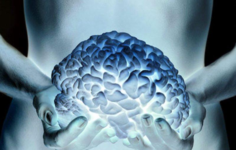 Un segundo cerebro.