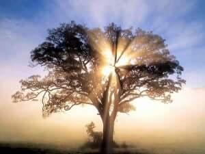 El árbol de lasmanzanas.